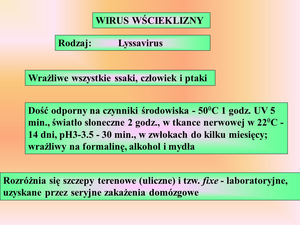 Rodzaj:Lyssavirus Wrażliwe wszystkie ssaki, człowiek i ptaki Dość odporny na czynniki środowiska - 50 0 C 1 godz. UV 5 min., światło słoneczne 2 godz.