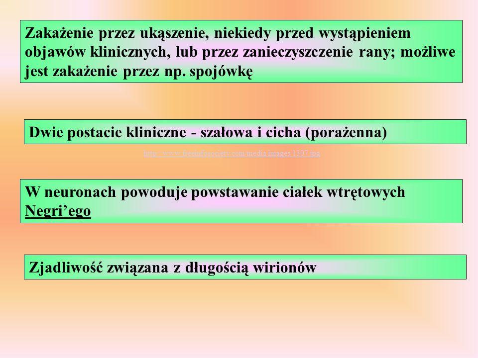Zakażenie przez ukąszenie, niekiedy przed wystąpieniem objawów klinicznych, lub przez zanieczyszczenie rany; możliwe jest zakażenie przez np. spojówkę