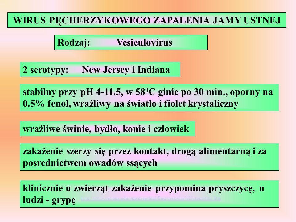 WIRUS PĘCHERZYKOWEGO ZAPALENIA JAMY USTNEJ Rodzaj:Vesiculovirus 2 serotypy:New Jersey i Indiana stabilny przy pH 4-11.5, w 58 0 C ginie po 30 min., op