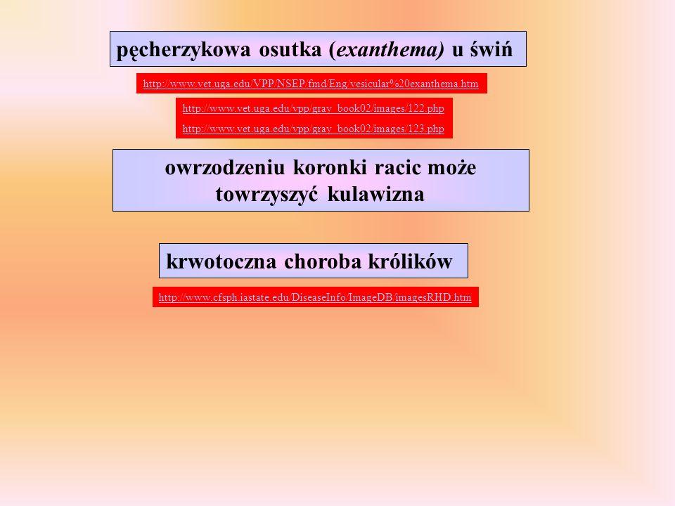 Kliniczny obraz zakażenia znajdziesz TU: Koci kaliciwirus Ostra, bolesna kulawizna spowodowana zapaleniem stawów i mięśni Gorączka Owrzodzenia języka, podniebienia, warg lub nosa Owrzodzenia okolic pazurów, stóp i między palcami Zapalenie górnych dróg oddechowych z dusznością i wyciekiem z nosa i worka spojówkowego http://www.sheltermedicine.com/portal/is_vsfcv.shtml