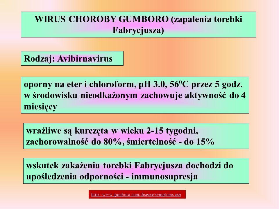 WIRUS CHOROBY GUMBORO (zapalenia torebki Fabrycjusza) Rodzaj: Avibirnavirus oporny na eter i chloroform, pH 3.0, 56 0 C przez 5 godz. w środowisku nie