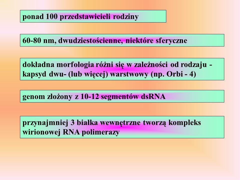ponad 100 przedstawicieli rodziny 60-80 nm, dwudziestościenne, niektóre sferyczne dokładna morfologia różni się w zależności od rodzaju - kapsyd dwu-