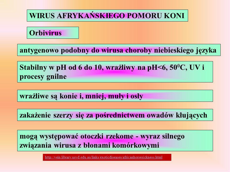 WIRUS AFRYKAŃSKIEGO POMORU KONI Orbivirus antygenowo podobny do wirusa choroby niebieskiego języka Stabilny w pH od 6 do 10, wrażliwy na pH<6, 50 0 C,