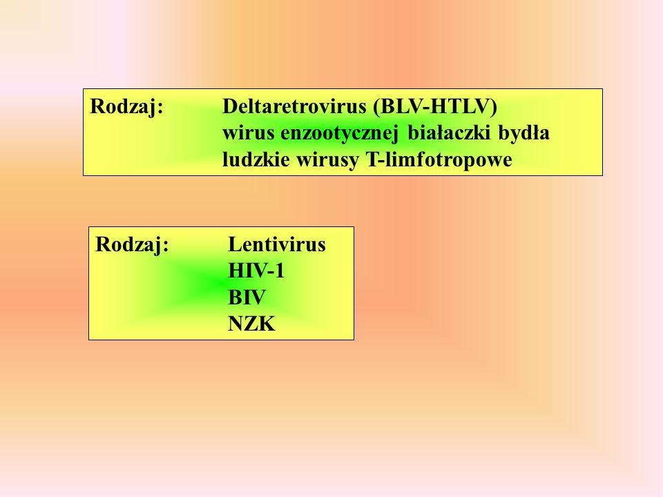 Rodzaj: Deltaretrovirus (BLV-HTLV) wirus enzootycznej białaczki bydła ludzkie wirusy T-limfotropowe Rodzaj: Lentivirus HIV-1 BIV NZK