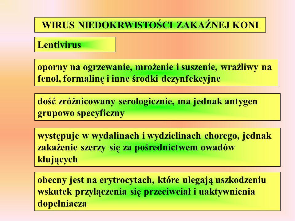 WIRUS NIEDOKRWISTOŚCI ZAKAŹNEJ KONI Lentivirus oporny na ogrzewanie, mrożenie i suszenie, wrażliwy na fenol, formalinę i inne środki dezynfekcyjne doś