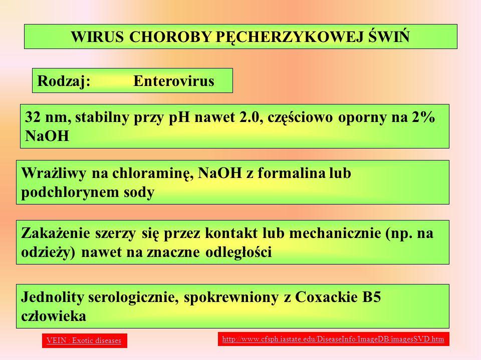 WIRUS CHOROBY CIESZYŃSKIEJ Wrażliwe tylko świnie, wirus można izolować z kału i OUN Oporny na pH 2.5-13, zachowuje aktywność w przetworach peklowanych i wędzonych, chloramina i formalina niszczą go po 1-2 godz.