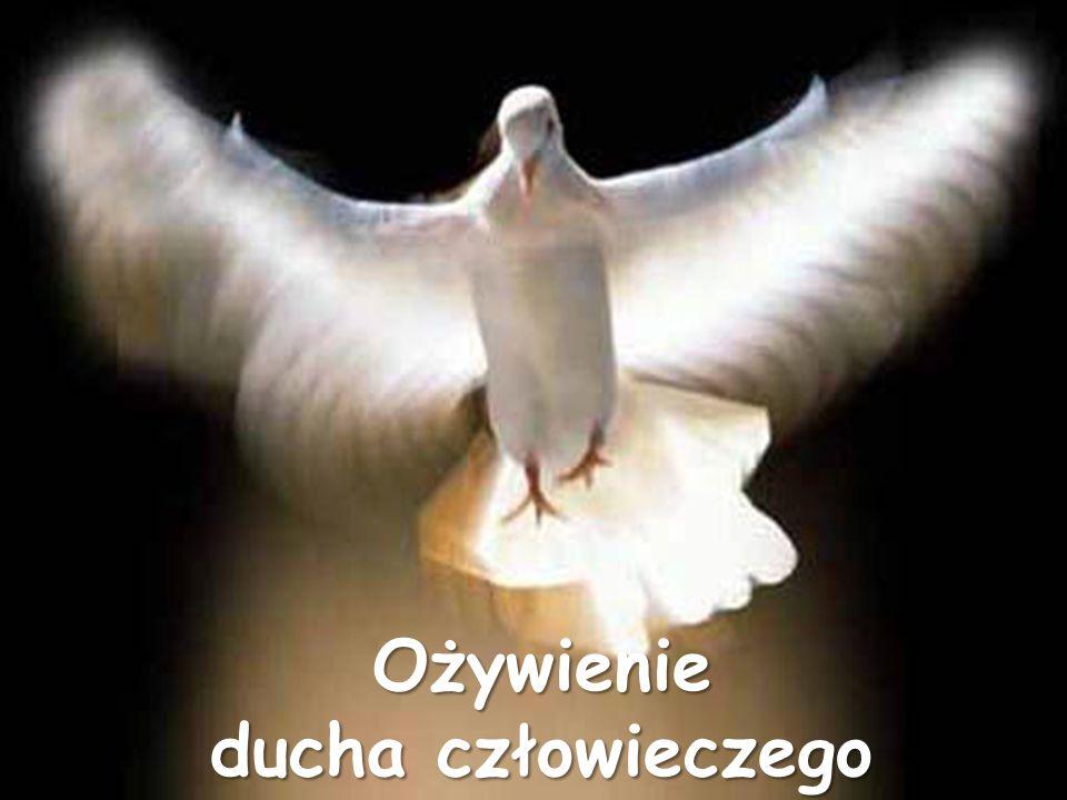 Nowe narodzenie (odrodzenie ducha człowieczego): przedstawiciel nowej rasy przedstawiciel nowej rasy uczestnik boskiej natury uczestnik boskiej natury mamy pokój z Bogiem mamy pokój z Bogiem duch człowieczy - mieszkaniem Boga duch człowieczy - mieszkaniem Boga Duch Święty świadczy z naszym duchem, że jesteśmy dziećmi Boga Duch Święty świadczy z naszym duchem, że jesteśmy dziećmi Boga otrzymujemy ducha synostwa otrzymujemy ducha synostwa otrzymanie obywatelstwa Królestwa Jasności otrzymanie obywatelstwa Królestwa Jasności otrzymanie pewności zbawienia otrzymanie pewności zbawienia