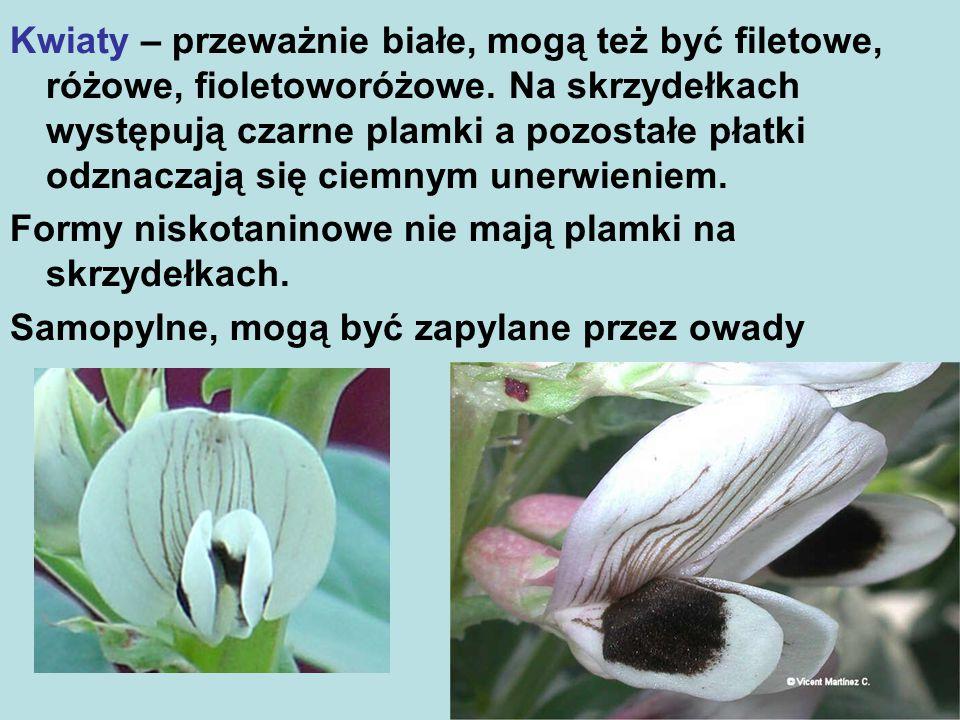 Kwiaty – przeważnie białe, mogą też być filetowe, różowe, fioletoworóżowe.