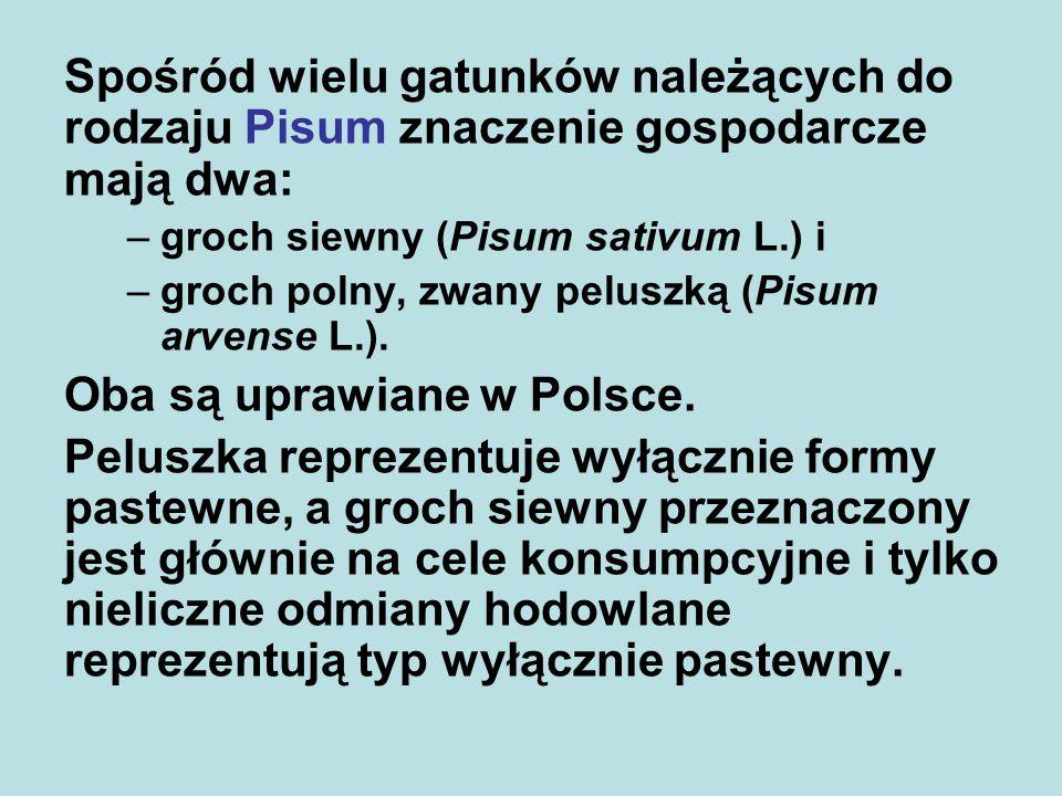 Spośród wielu gatunków należących do rodzaju Pisum znaczenie gospodarcze mają dwa: –groch siewny (Pisum sativum L.) i –groch polny, zwany peluszką (Pisum arvense L.).