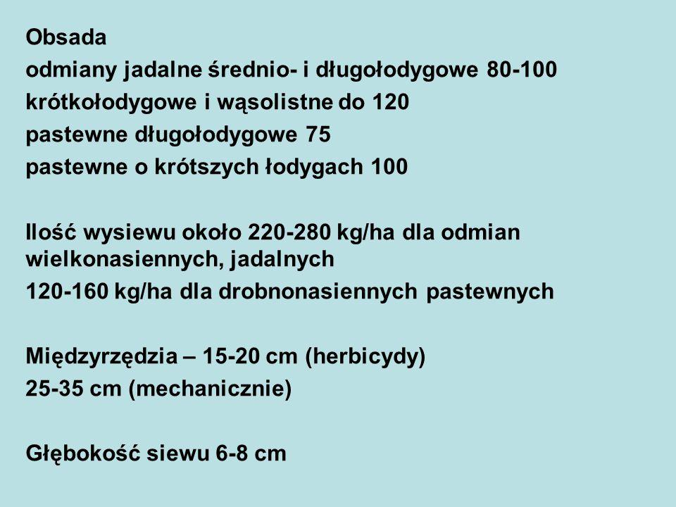 Obsada odmiany jadalne średnio- i długołodygowe 80-100 krótkołodygowe i wąsolistne do 120 pastewne długołodygowe 75 pastewne o krótszych łodygach 100 Ilość wysiewu około 220-280 kg/ha dla odmian wielkonasiennych, jadalnych 120-160 kg/ha dla drobnonasiennych pastewnych Międzyrzędzia – 15-20 cm (herbicydy) 25-35 cm (mechanicznie) Głębokość siewu 6-8 cm