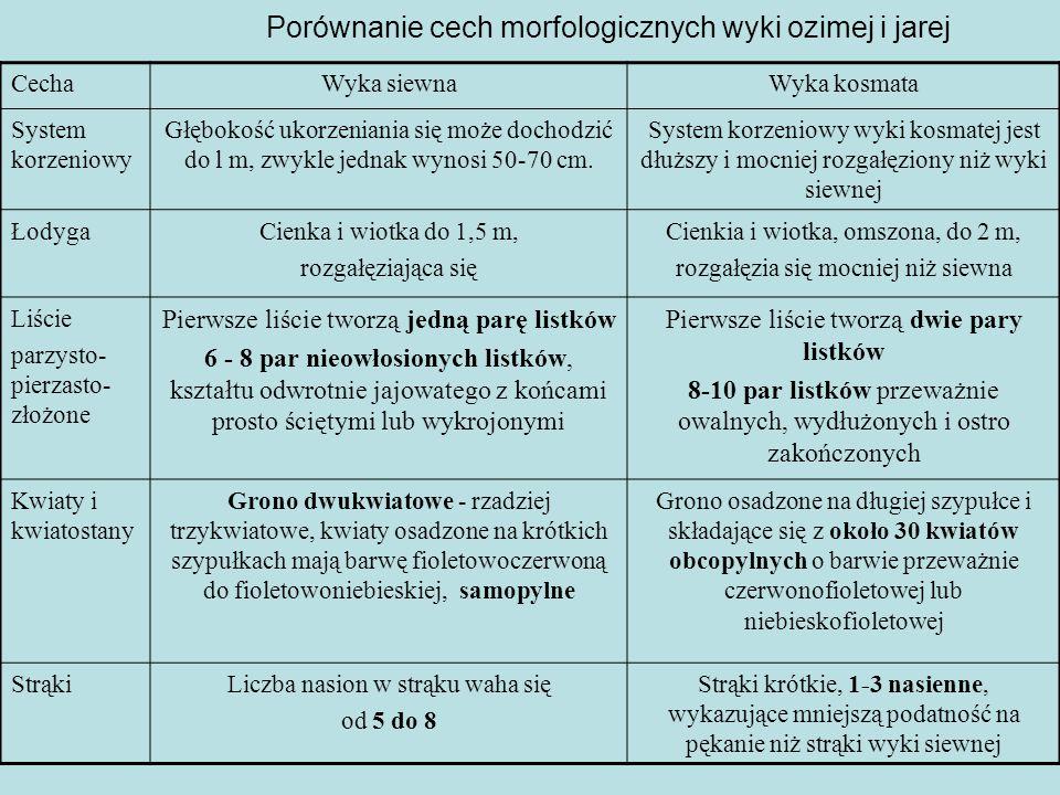 Porównanie cech morfologicznych wyki ozimej i jarej CechaWyka siewnaWyka kosmata System korzeniowy Głębokość ukorzeniania się może dochodzić do l m, zwykle jednak wynosi 50-70 cm.