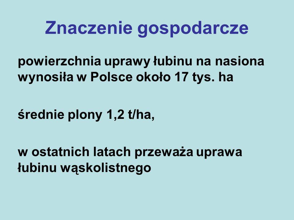 Znaczenie gospodarcze powierzchnia uprawy łubinu na nasiona wynosiła w Polsce około 17 tys.
