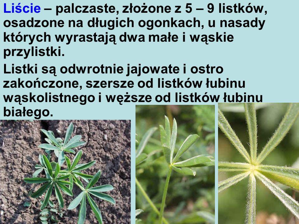 Liście – palczaste, złożone z 5 – 9 listków, osadzone na długich ogonkach, u nasady których wyrastają dwa małe i wąskie przylistki.