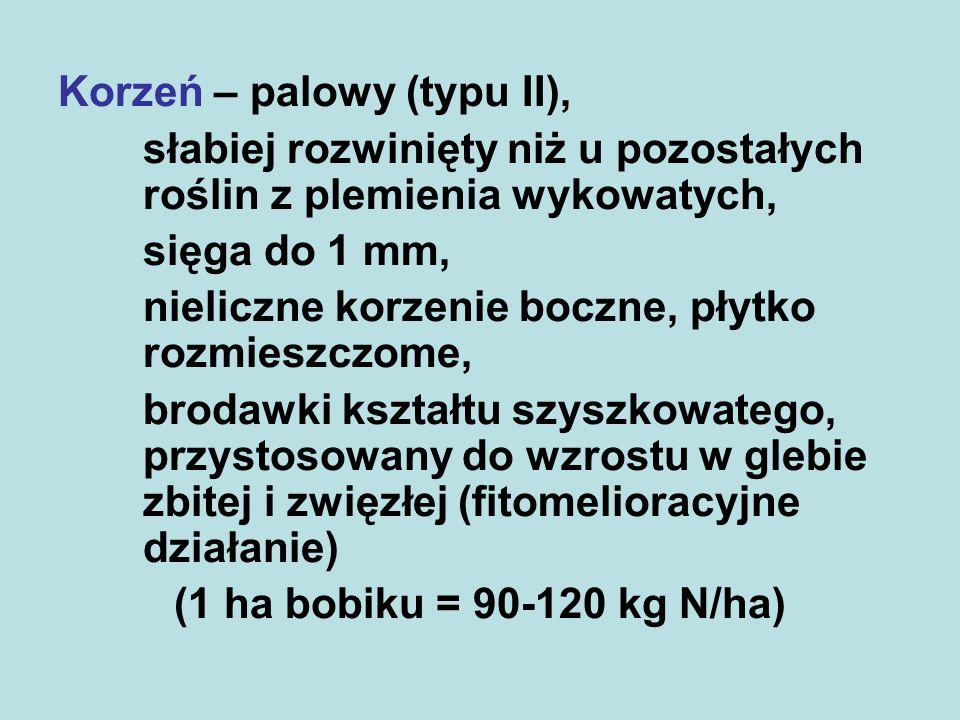 Korzeń – palowy (typu II), słabiej rozwinięty niż u pozostałych roślin z plemienia wykowatych, sięga do 1 mm, nieliczne korzenie boczne, płytko rozmieszczome, brodawki kształtu szyszkowatego, przystosowany do wzrostu w glebie zbitej i zwięzłej (fitomelioracyjne działanie) (1 ha bobiku = 90-120 kg N/ha)