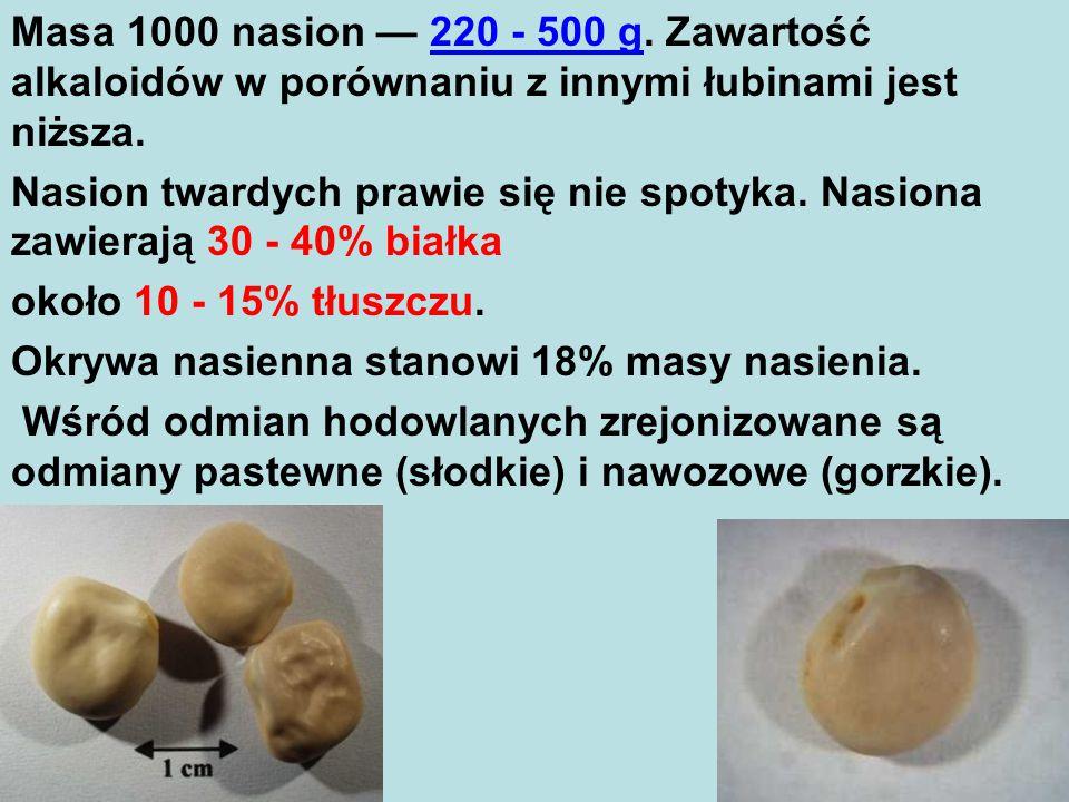 Masa 1000 nasion — 220 - 500 g.Zawartość alkaloidów w porównaniu z innymi łubinami jest niższa.
