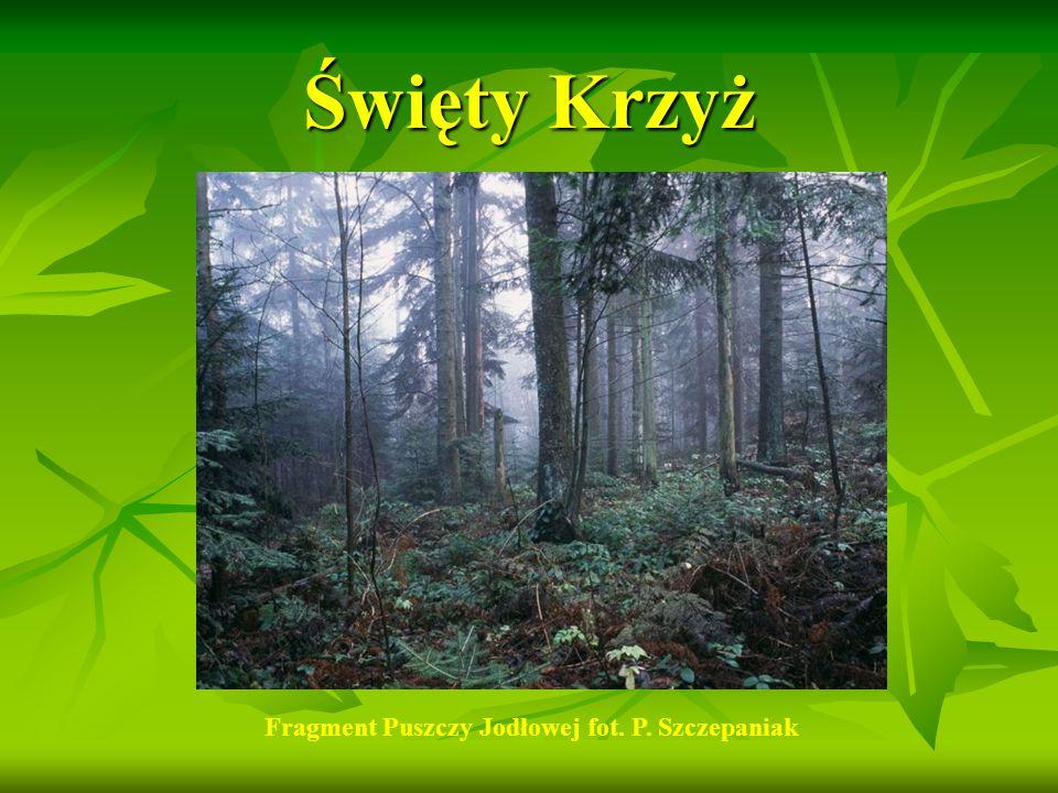 Rośliny chronione w ŚPN Rosiczka okrągłolistna Mieczyk dachówkowaty http://www.gptyczyn.edomena.pl/ekologia/index.php?option=com_content&task=view&id=32&Itemid=43