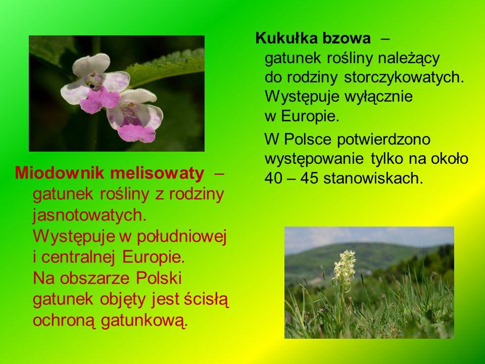 Miodownik melisowaty – gatunek rośliny z rodziny jasnotowatych. Występuje w południowej i centralnej Europie. Na obszarze Polski gatunek objęty jest ś