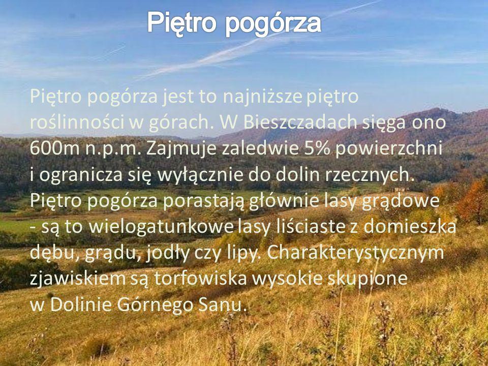 Piętro pogórza jest to najniższe piętro roślinności w górach. W Bieszczadach sięga ono 600m n.p.m. Zajmuje zaledwie 5% powierzchni i ogranicza się wył
