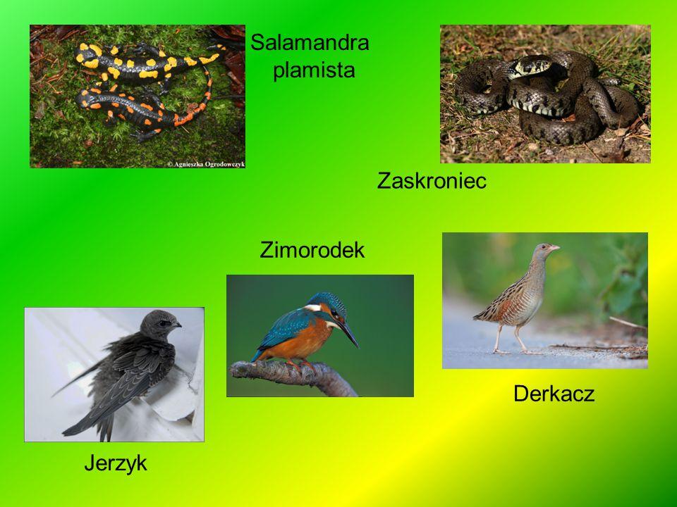 http://www.bdpn.pl/ http://www.witajwpodrozy.pl/inspiracje/galopem-przez-polske.html?print=1 http://www.poranny.pl/apps/pbcs.dll/article?AID=/20120715/MAGAZYN/120719897 http://globtroters.3lo.pl/index.php?option=com_content&view=article&id=9:parki_narodowe_- _pigu%C5%82ka&catid=3:polska-article&Itemid=114 http://mobini.pl/etapetki/plik/FFpxUs5iLQu-wyjacy-wilk http://pl.wikipedia.org/wiki/Bieszczadzki_Park_Narodowy http://pl.wikipedia.org/wiki/Ry%C5%9B http://pl.wikipedia.org/wiki/%C5%BBbik http://pl.wikipedia.org/wiki/Nied%C5%BAwied%C5%BA_brunatny http://pl.wikipedia.org/wiki/Wilk http://pl.wikipedia.org/wiki/%C5%BBubr http://pl.wikipedia.org/wiki/Ko%C5%84_huculski http://www.grupabieszczady.pl/index.php?option=com_content&view=article&id=97&Itemid=112 http://www.pkwe.pl/?p=p_53& http://portalwiedzy.onet.pl/80778,,,,lilia_zlotoglow,haslo.html http:// przyrodniczek.pl/2013/08/dziewiecsi-bezodygowy.html http://natura2000.fwie.pl/index.php/dj-catalog2/flora-i-fauna/117-sniezyca-wiosenna http://golubie.pl/?poloniny,21 http://plamkamazurka.blox.pl/2010/01/Krogulec-Ptak-Zimy-2010.html http://www.tapetus.pl/142495,niedzwiedz-brunatny-rzeka.php http://animalsworld.blog.pl/2012/01/24/darniowka/ http://zielnik-karpacki.pl/-GO%C5%B9DZIK_SKUPIONY_209 http://natura20001249.republika.pl/scorzonera.htm http://lomiankowadolina.republika.pl/pages2/carynskazwetlinskiej0188a13a2001jesien2a2a2.html http://andrzej-banach.eu/szlaki-turystczne/bieszczady/polonina-wetlinska/ http://www.szkolnictwo.pl/szukaj,Regiel_dolny http://cit.ustrzyki-dolne.pl/index.php?option=com_content&view=article&id=70&Itemid=183