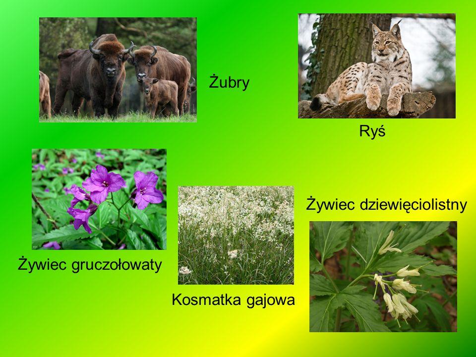Połonina jest wyrazem wschodniosłowiańskim i oznacza miejsce płonne - puste, nienadające się do uprawy roli.