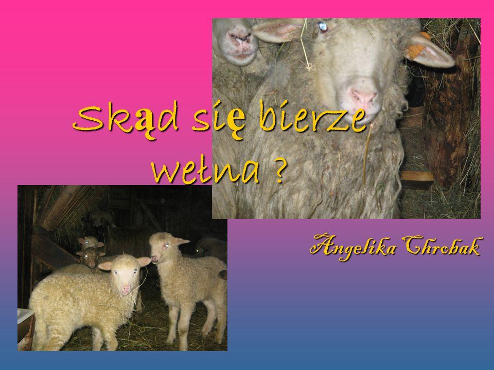 Spis tre ś ci Spis tre ś ci 1.Strzy ż enie owiec 2.