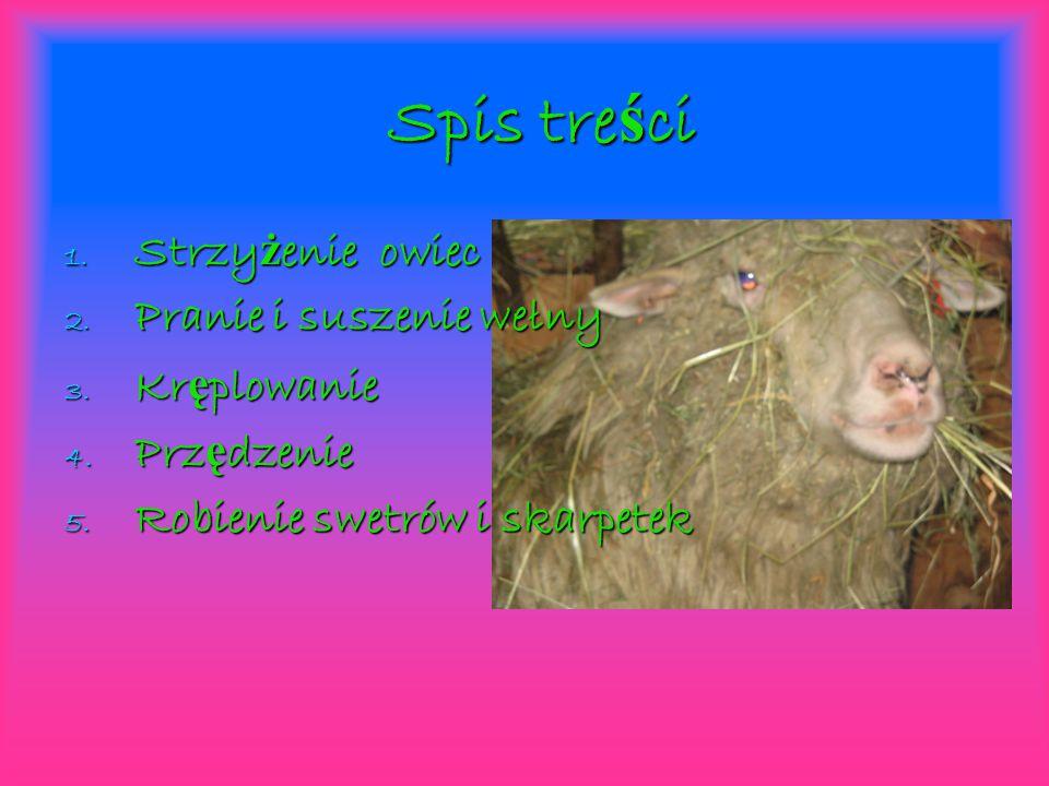 Strzy ż enie owiec Pierwsz ą czynno ś ci ą w produkcji wełny jest strzy ż enie owiec.
