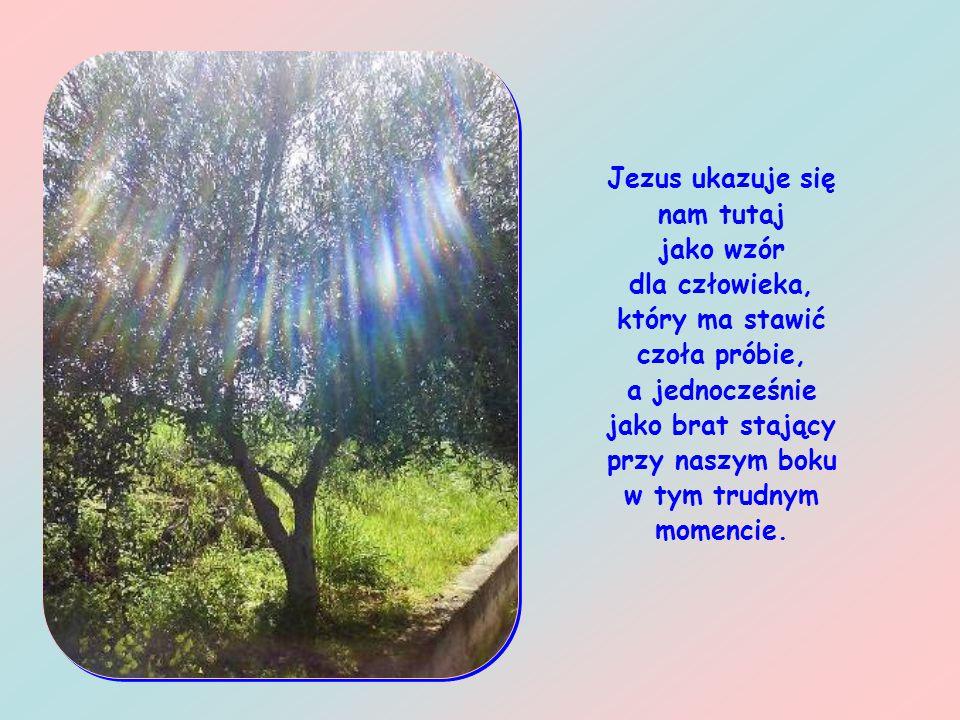 Wobec zbliżającej się męki Jezus modli się ze wszystkich sił swojej duszy, walczy z uczuciem odrazy i lęku przed śmiercią, powierza się całkowicie mił