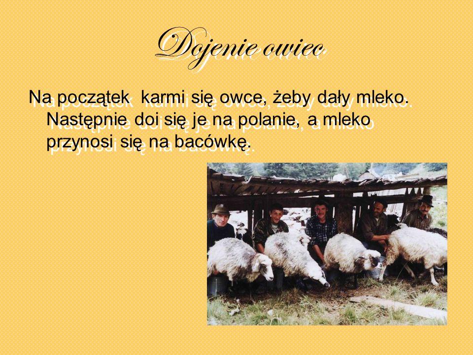 Dojenie owiec Na początek karmi się owce, żeby dały mleko. Następnie doi się je na polanie, a mleko przynosi się na bacówkę. Na początek karmi się owc