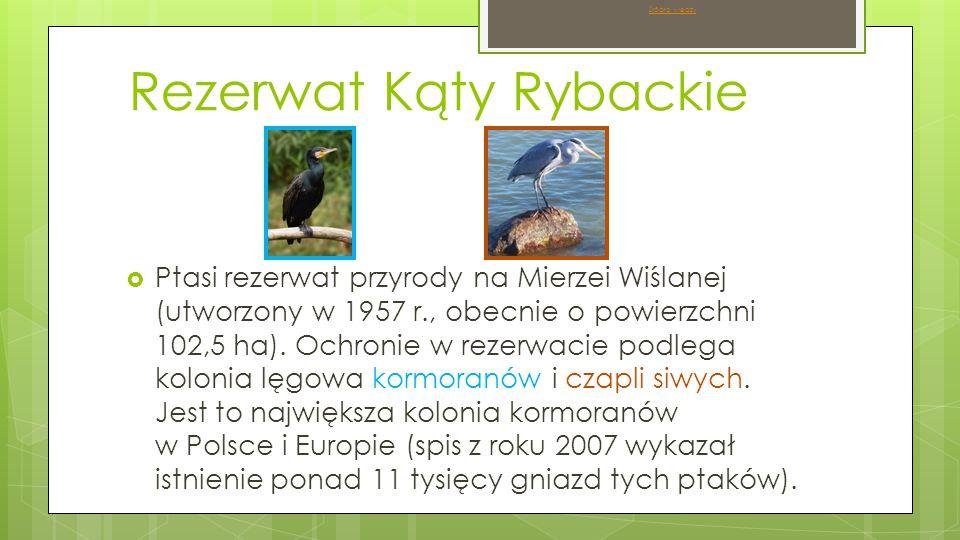Rezerwat Kąty Rybackie  Ptasi rezerwat przyrody na Mierzei Wiślanej (utworzony w 1957 r., obecnie o powierzchni 102,5 ha).