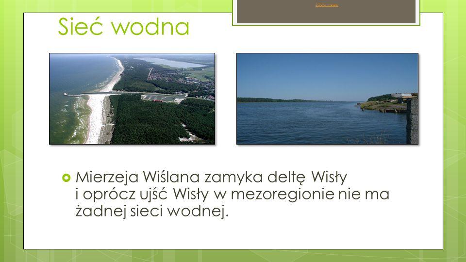 Sieć wodna  Mierzeja Wiślana zamyka deltę Wisły i oprócz ujść Wisły w mezoregionie nie ma żadnej sieci wodnej.
