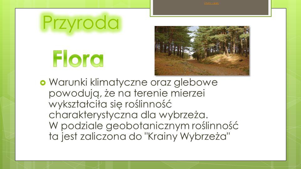  Warunki klimatyczne oraz glebowe powodują, że na terenie mierzei wykształciła się roślinność charakterystyczna dla wybrzeża.