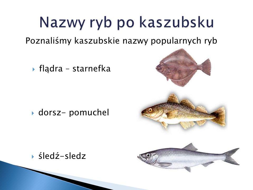  flądra – starnefka Poznaliśmy kaszubskie nazwy popularnych ryb  dorsz- pomuchel  śledź-sledz