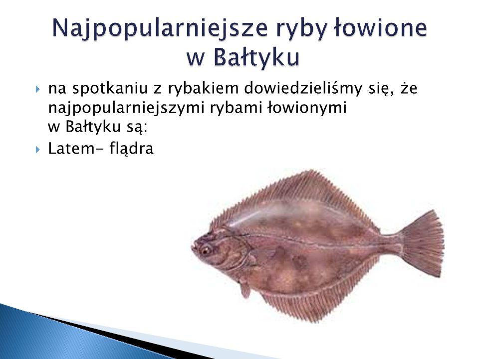  na spotkaniu z rybakiem dowiedzieliśmy się, że najpopularniejszymi rybami łowionymi w Bałtyku są:  Latem- flądra