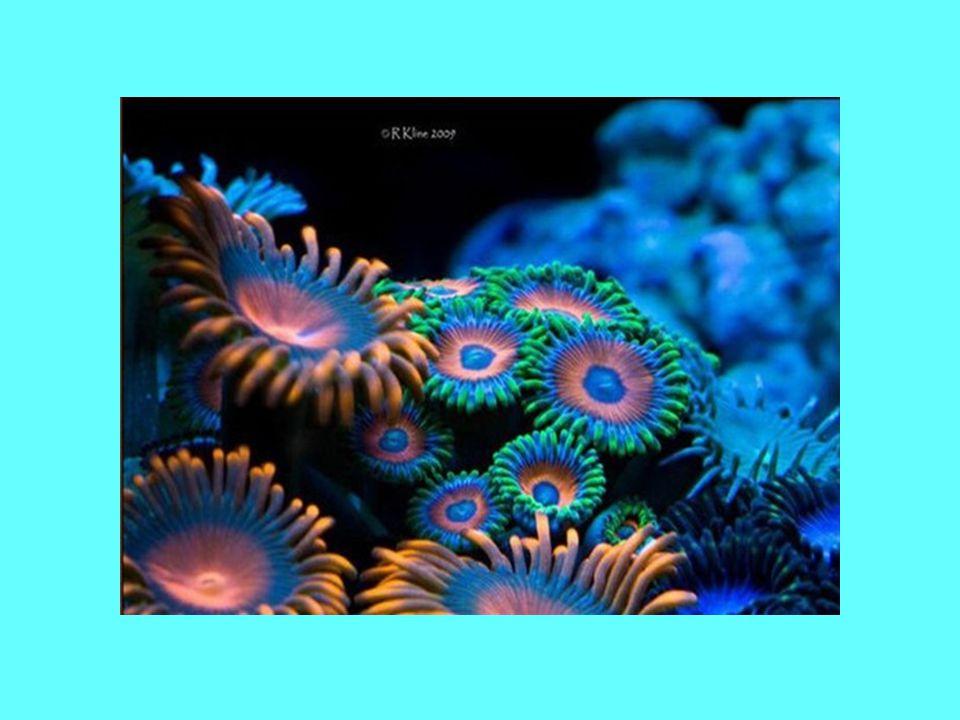 Rafa koralowa jest pięknym ekosystemem, dlatego chciałybyśmy przedstawić wam kilka najpiękniejszych zdjęć: