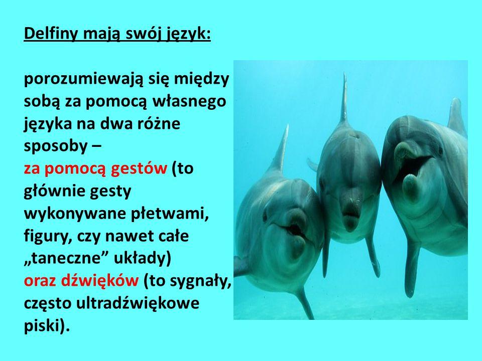 to jedne z najbardziej fascynujących okazów wodnej fauny. Uważa się je za zwierząt na Ziemi, a niektóre ludy twierdzą wręcz, że jedne z najinteligentn