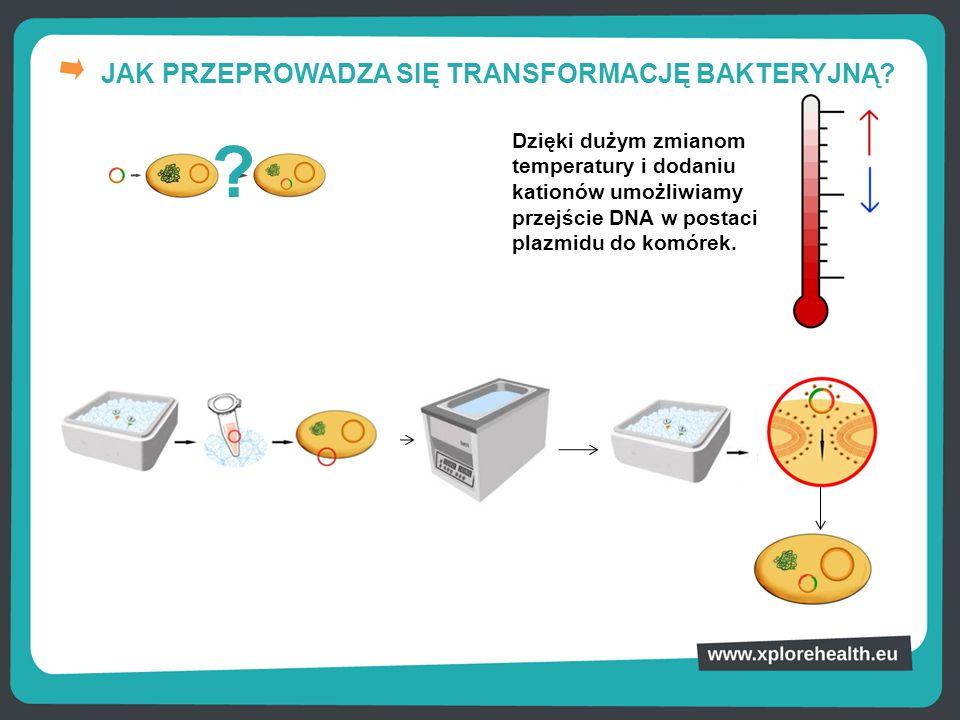 JAK PRZEPROWADZA SIĘ TRANSFORMACJĘ BAKTERYJNĄ? Dzięki dużym zmianom temperatury i dodaniu kationów umożliwiamy przejście DNA w postaci plazmidu do kom