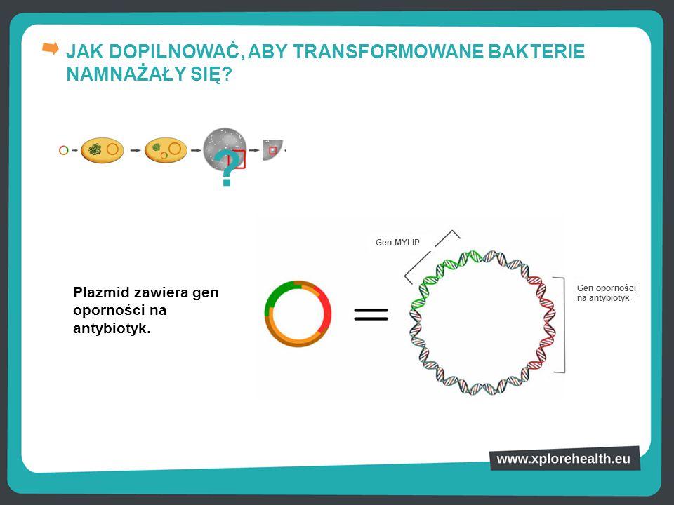 JAK DOPILNOWAĆ, ABY TRANSFORMOWANE BAKTERIE NAMNAŻAŁY SIĘ? Plazmid zawiera gen oporności na antybiotyk. ? Gen oporności na antybiotyk Gen MYLIP