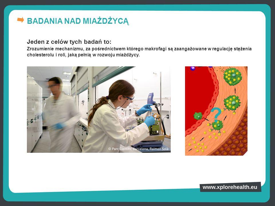BADANIA NAD MIAŻDŻYCĄ Jeden z celów tych badań to: Zrozumienie mechanizmu, za pośrednictwem którego makrofagi są zaangażowane w regulację stężenia cho