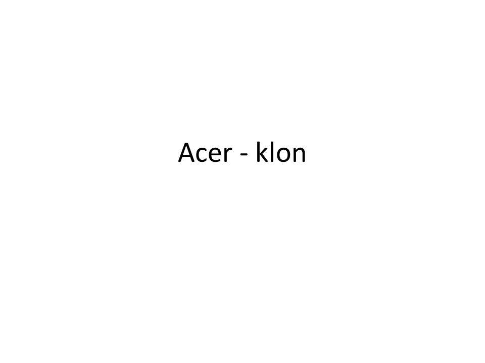 Acer - klon