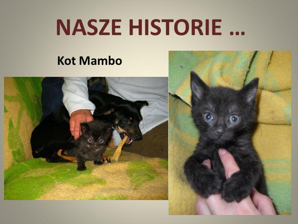 NASZE HISTORIE … Kot Mambo