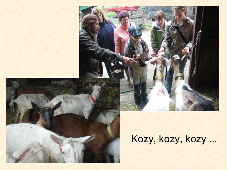 Kozy, kozy, kozy...