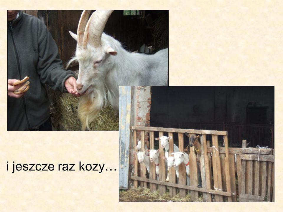 i jeszcze raz kozy…