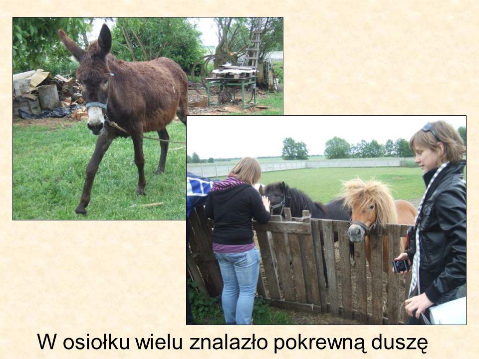Na koniec – stragany z regionalnymi potrawami w Poznaniu