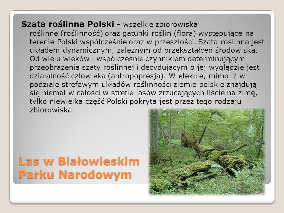Las w Białowieskim Parku Narodowym Szata roślinna Polski - wszelkie zbiorowiska roślinne (roślinność) oraz gatunki roślin (flora) występujące na teren