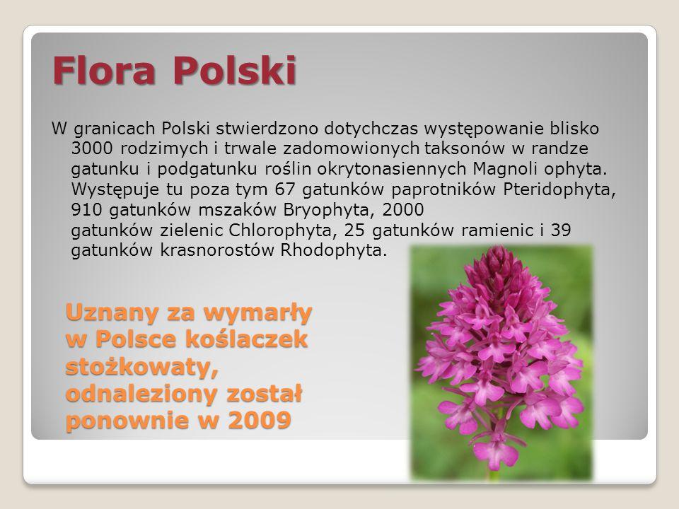 Uznany za wymarły w Polsce koślaczek stożkowaty, odnaleziony został ponownie w 2009 Flora Polski W granicach Polski stwierdzono dotychczas występowani