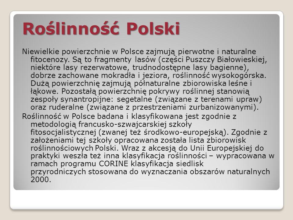 Roślinność Polski Niewielkie powierzchnie w Polsce zajmują pierwotne i naturalne fitocenozy. Są to fragmenty lasów (części Puszczy Białowieskiej, niek