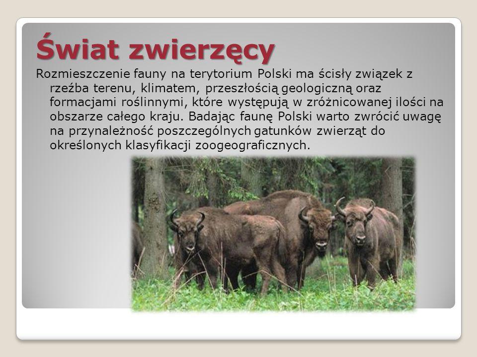 Świat zwierzęcy Rozmieszczenie fauny na terytorium Polski ma ścisły związek z rzeźba terenu, klimatem, przeszłością geologiczną oraz formacjami roślin