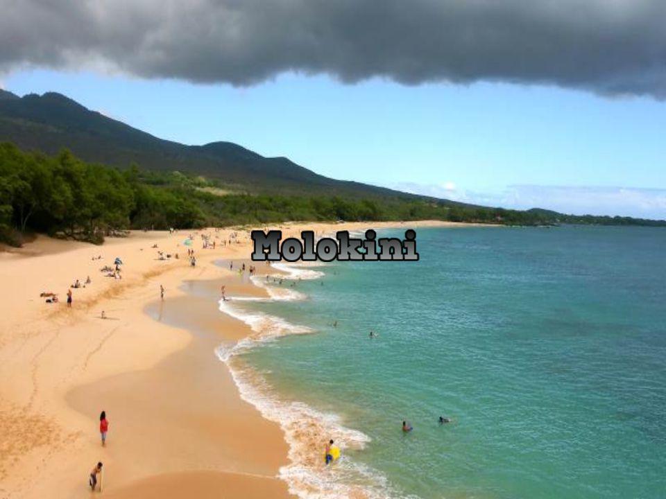 Molokini is a tiny island located 4 km from the coast of the island Mauri.