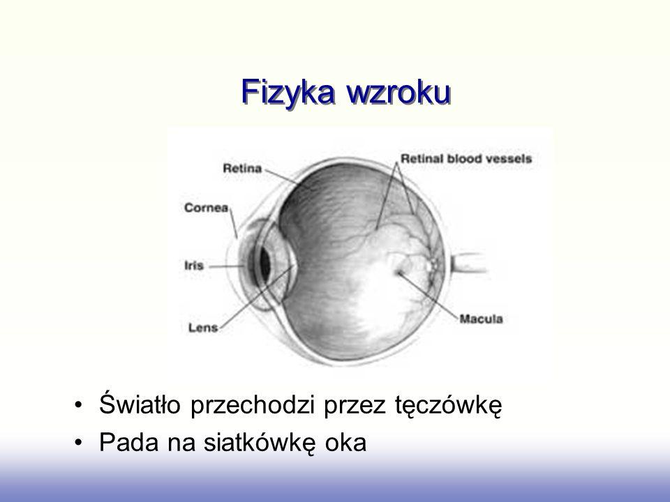 Wczesne i późniejsze widzenie Wczesne widzenie: nerwy przetwarzają informację Późniejsze widzenie (wyższy poziom) przetwarzane w mózgu Bardzo duży procent mózgu jest odpowiedzialny za przetwarzanie wizualne