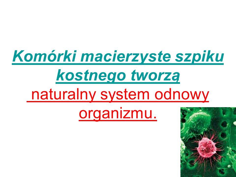 Komórki macierzyste szpiku kostnego tworzą naturalny system odnowy organizmu.